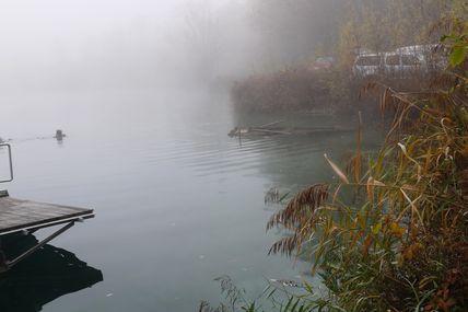 Brouillard en plaine mais explosion de vie et de couleur sous l'eau!