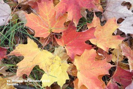 Un matin d'automne à Toronto