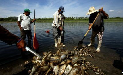 Dead fish fill Mexico reservoir