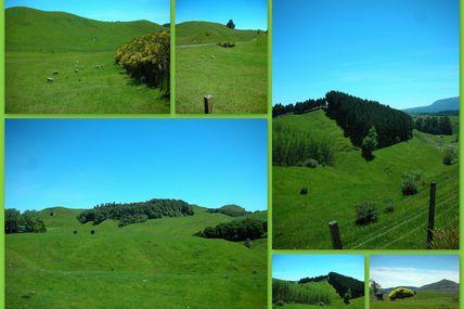 Rotorua #2 : Waimangu Volcanic Valley
