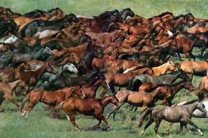 Califican de inhumana matanza de cien mil caballos...