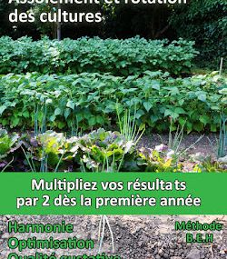 Rotations et assolement des cultures du potager