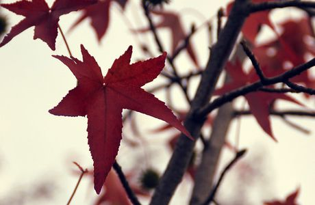 ...red...