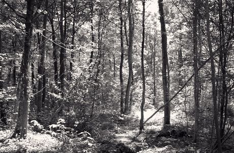 ...The forest...