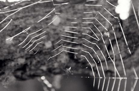 ...life's a spider web...