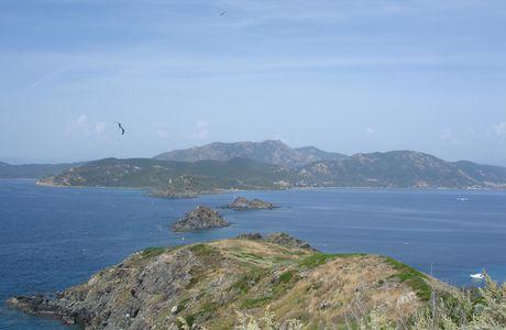 Corse : les goélands des iles Sanguinaires