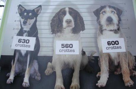 The dog Usual Suspects - Une histoire de chiens ...
