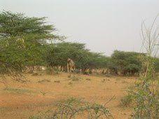 Nouvelles infos concernant AFRIKA RANCH/ Notizie sul progetto AFRIKA RANCH