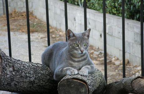 Un chat devant un poisson !