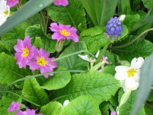 Des fleurs dans mon jardin...