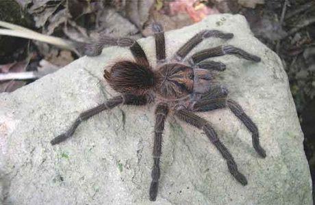 les araignées par Luce et Louise