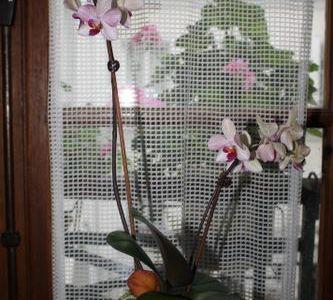 Orchidée et bonzai