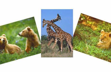 Primaire 1 - leçon 12 - Je suis reconnaissant pour les animaux.
