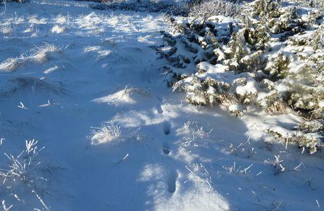 Raquettes dans la neige au coeur du strato-volcan du Sancy