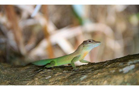 La faune guadeloupéenne (région de Basse-Terre)