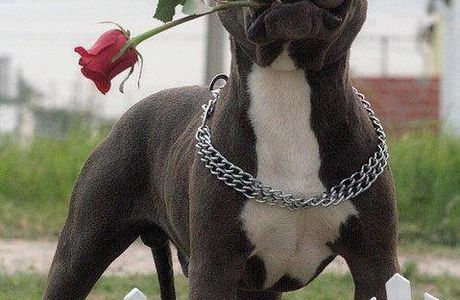 Don't hate me just becaue I'm a Pittbull.