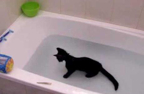 Qui a dit que les chats n'aimaient pas l'eau
