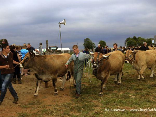 Groupes ou familles de vaches