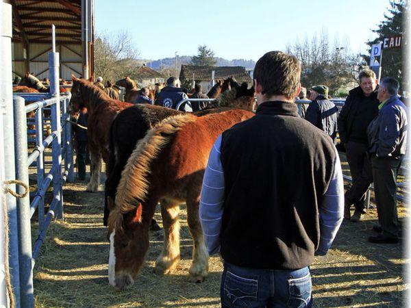 1ère foire aux chevaux de la saison 2012 à Maurs (15)