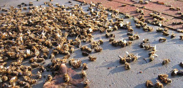 Ce rapport ne laisse aucun espoir : l'extinction des pollinisateurs condamne notre existence