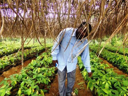 William Kameni: millionnaire grâce à la terre