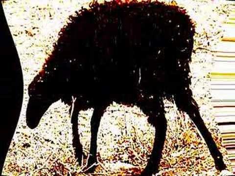 Len Faki - My Black Sheep