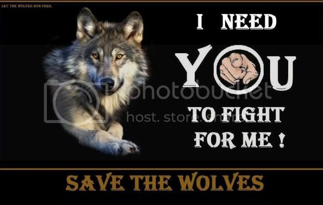 Save the wolves !
