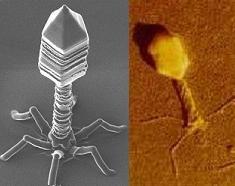 Une nanomachine pour lutter contre le cancer