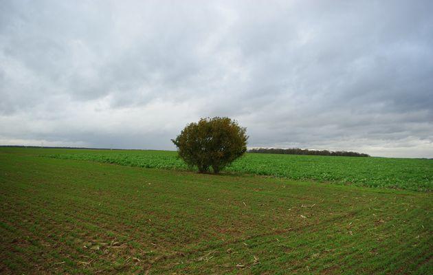 L'arbre champêtre