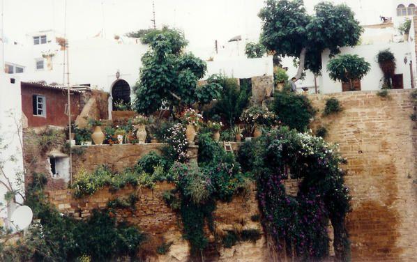 Dame nature reprend ses droits dans la Casbah des Oudayas, Rabat