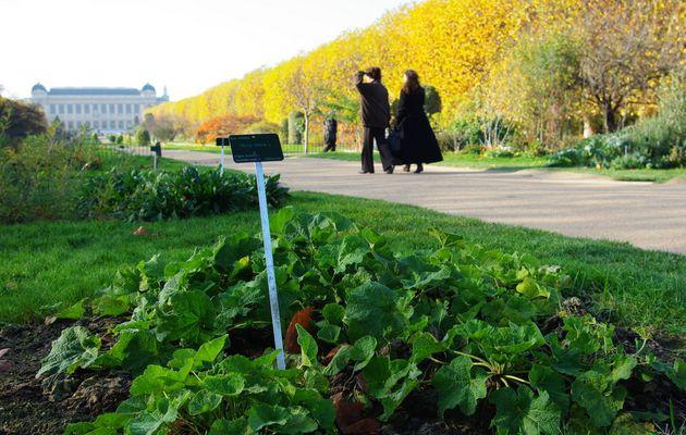 Défilé de feuilles au Jardin des Plantes à Paris
