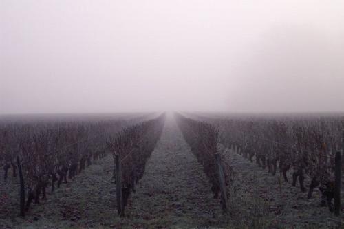 Balade dans les vignes...