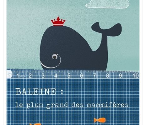 illustration baleine