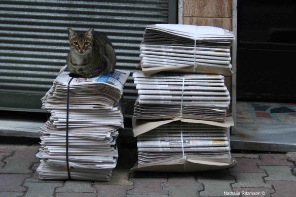 Quelques chats d'Istanbul parmi d'autres