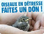 Participer à la protection des oiseaux
