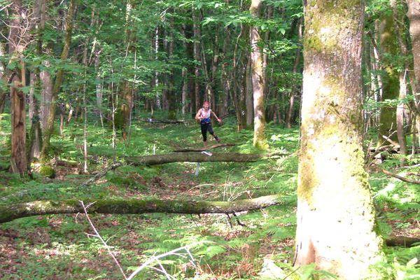 J+26 - Un saut en forêt série 2