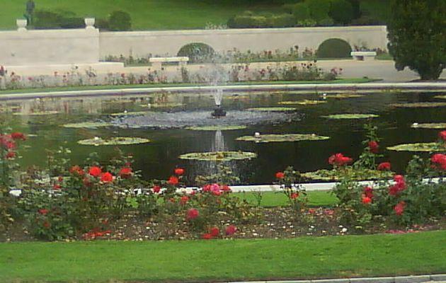 Douaumont: le bassin aux nenuphars
