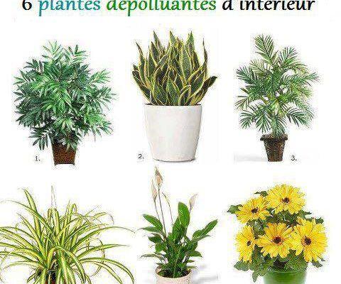 6 plantes pour la maison
