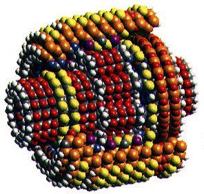 Moteurs moléculaires
