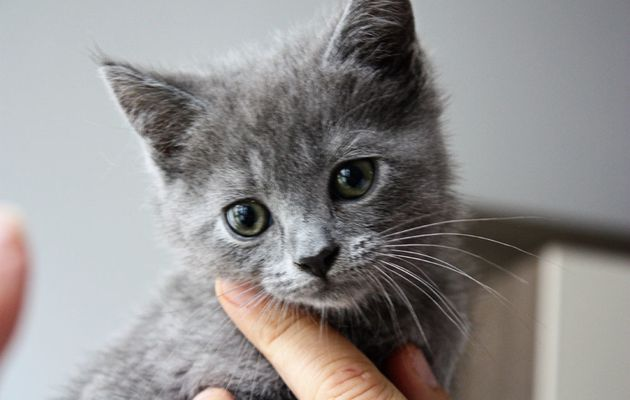 adopter ma petite boule qui s'appelle INA