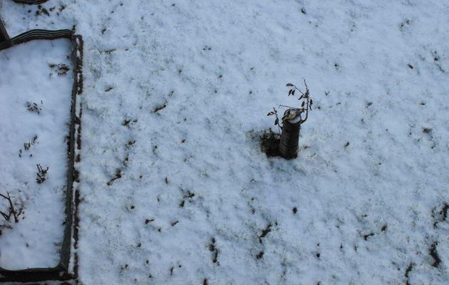 Traces dans la neige : photographies