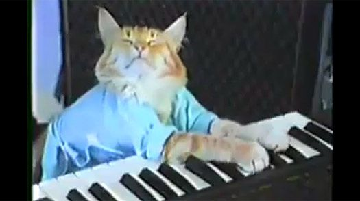 Keyboard Cat ouvre des pistaches??!