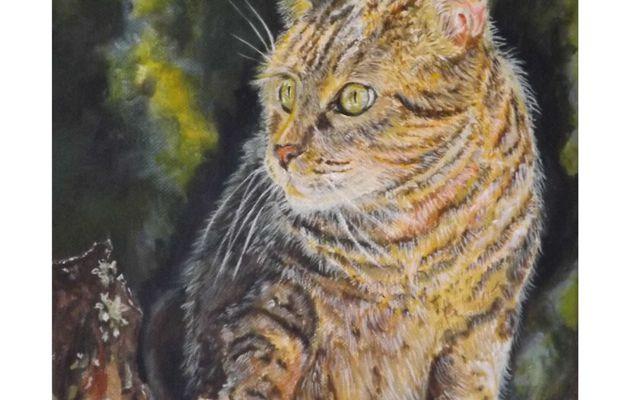 Le chat! - Kitten