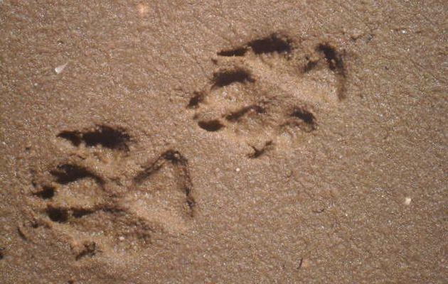 Traces dans le sable