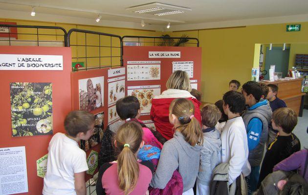 """Visitez l'exposition """"SAUVONS LES ABEILLES"""" - Maison du Tourisme de Lorgues du 15 au 22 mars"""