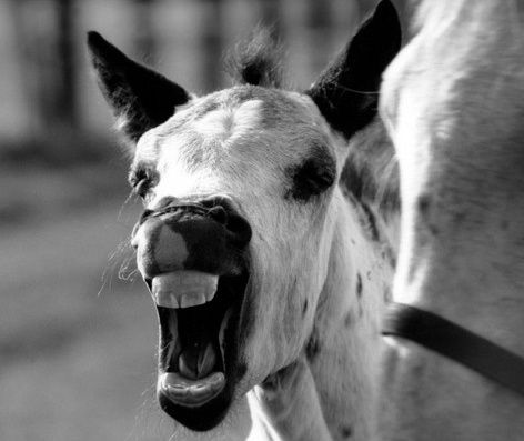 L'animal à l'origine de l'esprit - Quatrième des Causeries de Merleau-Ponty