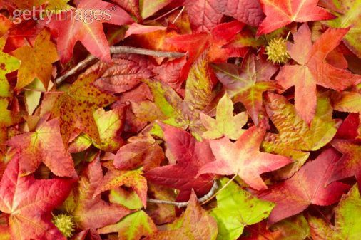 Welcome Autumn ♥