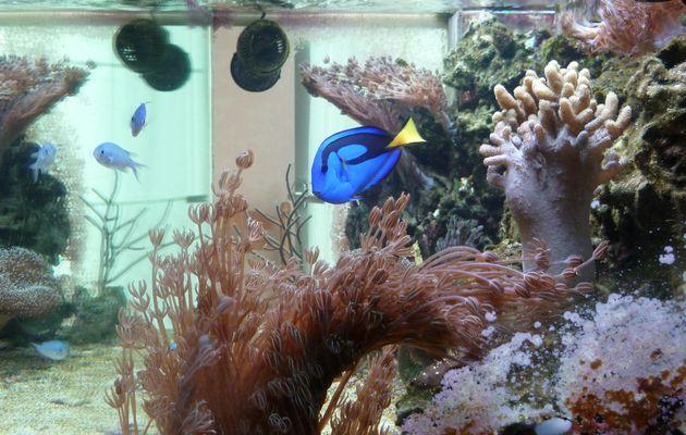 Mon Aquarium (Jauberlinois)