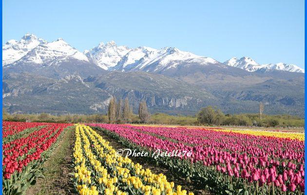 Magnifique  #Patagonie !