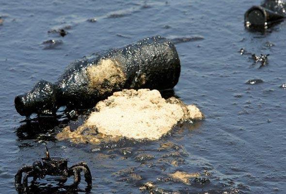 L'Arctique est la nouvelle terre promise des compagnies pétrolières.